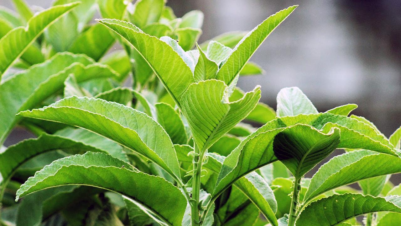 Yamang Bukid Healthy Products Inc